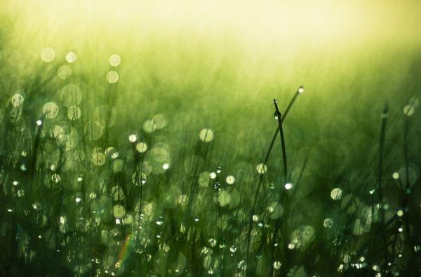 Morning Dew photographed by Joni Niemela- ONE EYELAND