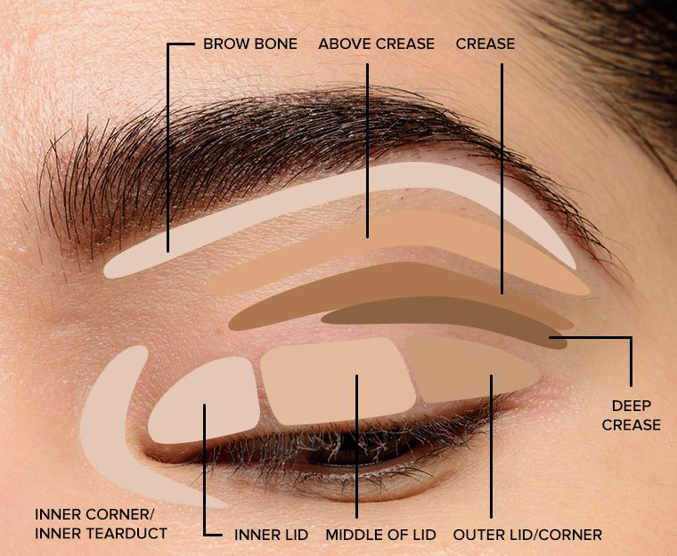 Where to Apply Eyeshadow + Eye Makeup Diagram #eyemakeup