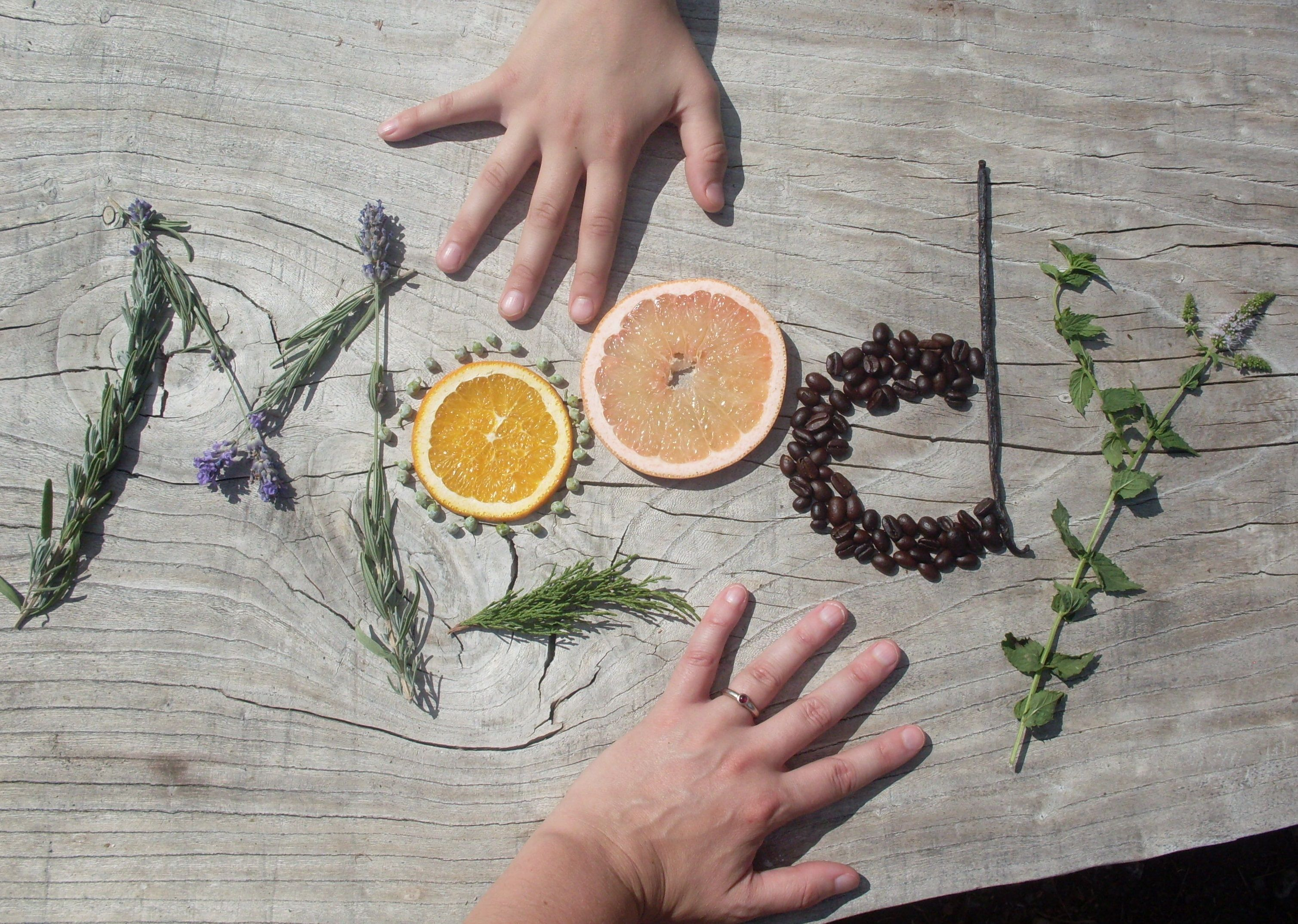 A few of our favorite ingredients used in Moody Sister's handmade skincare!