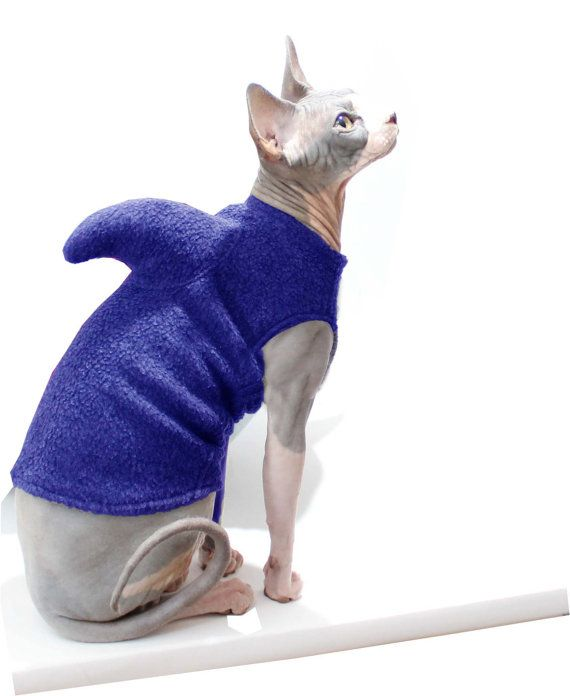 ba1d4c7b3c5 Cat Shark Costume - Sphynx Cat Clothes - Shark Week - Pet Shark Sweater -  Halloween