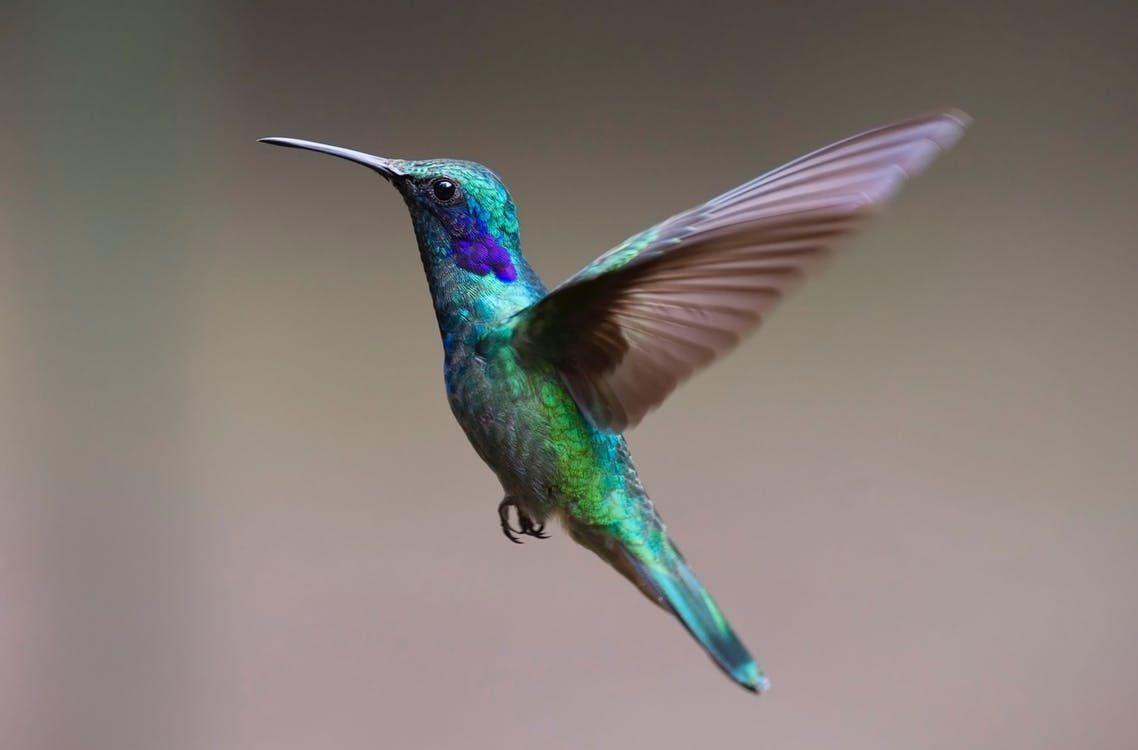 Kolibri Als Haustier Halten Kolibri Gratis Fotos Kostenlose Bilder