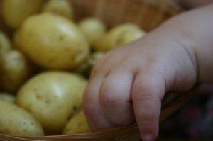 Chubby hand with potatoes