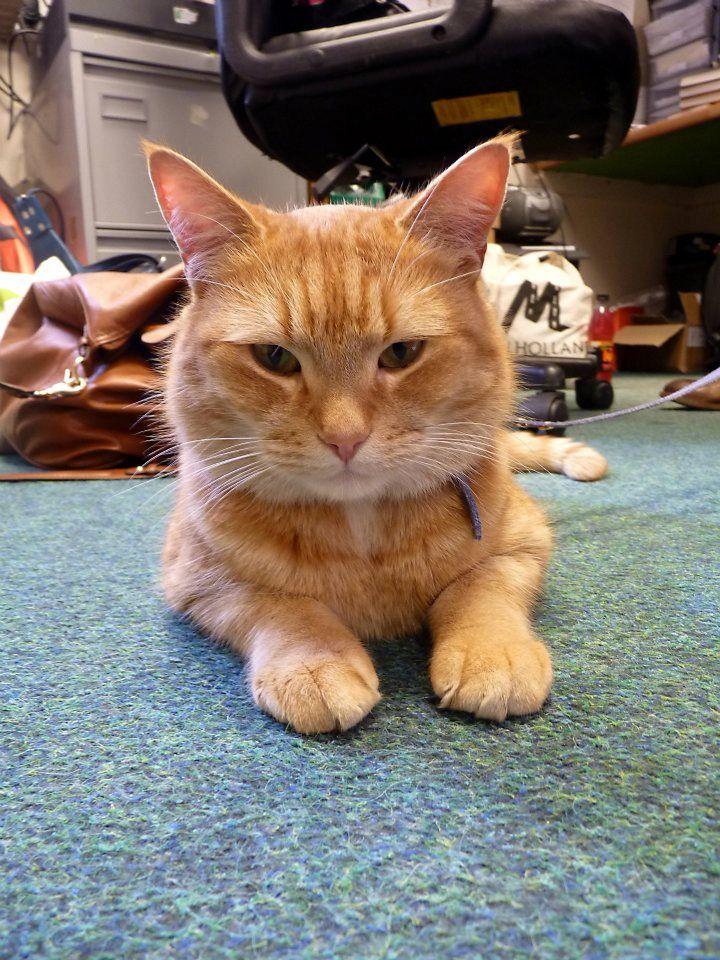 Bob Waterstones Walthamstow Street Cat Bob Russian Blue Cat Bengal Cat Facts