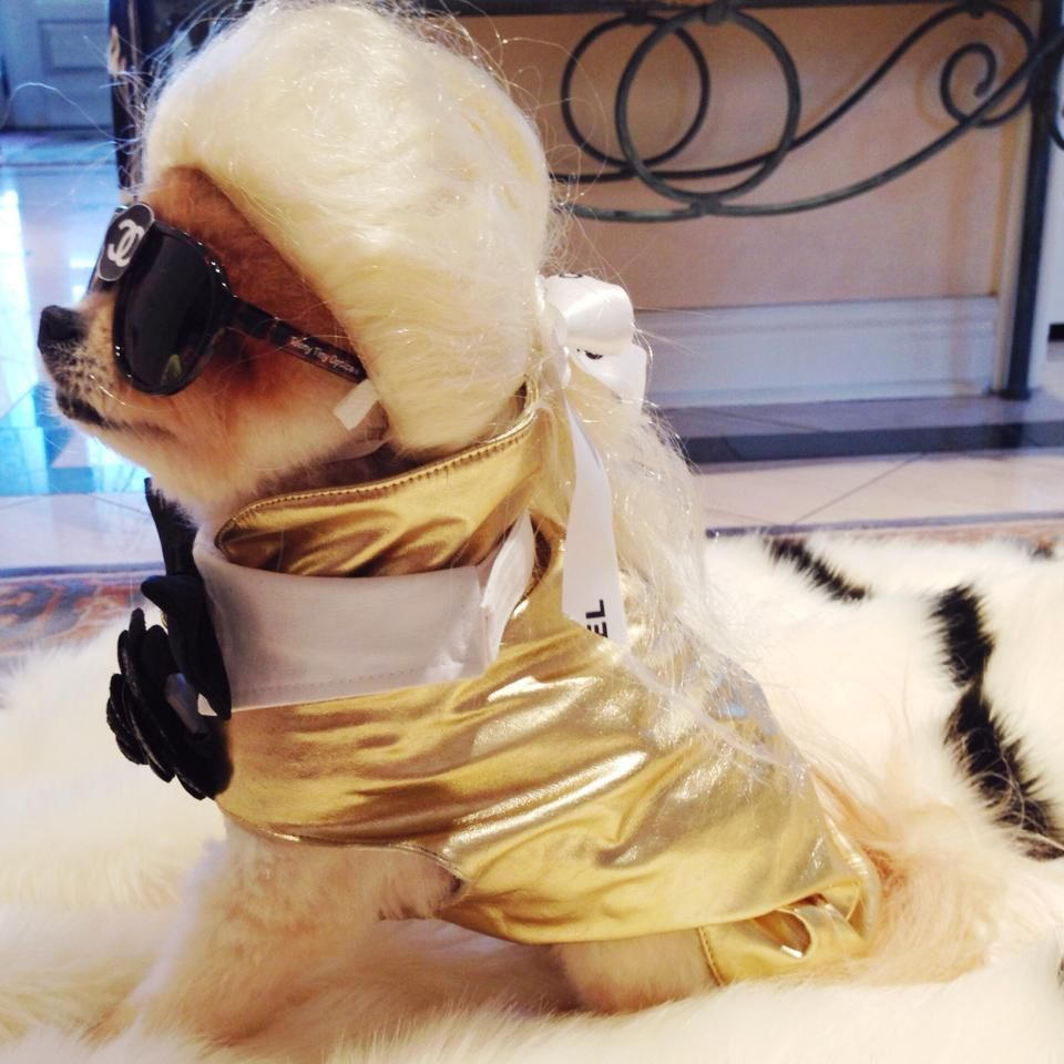Meet Karl Lagerwoof! The Beckerman Blog Girls sure know how to chic up their pups!   #dog #dogs #dogoftheday #Pomeranian #chic