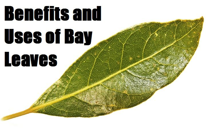 Benefits and Uses of Bay Leaves Most well known for it's ability to enrich the…