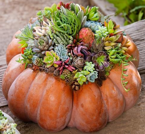 How To Create A Succulent Pumpkin Display Succulent Pumpkin