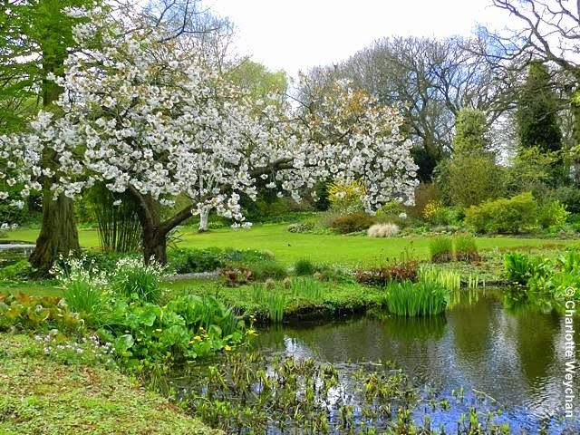 Blossom blooming at the Beth Chatto Gardens in Essex