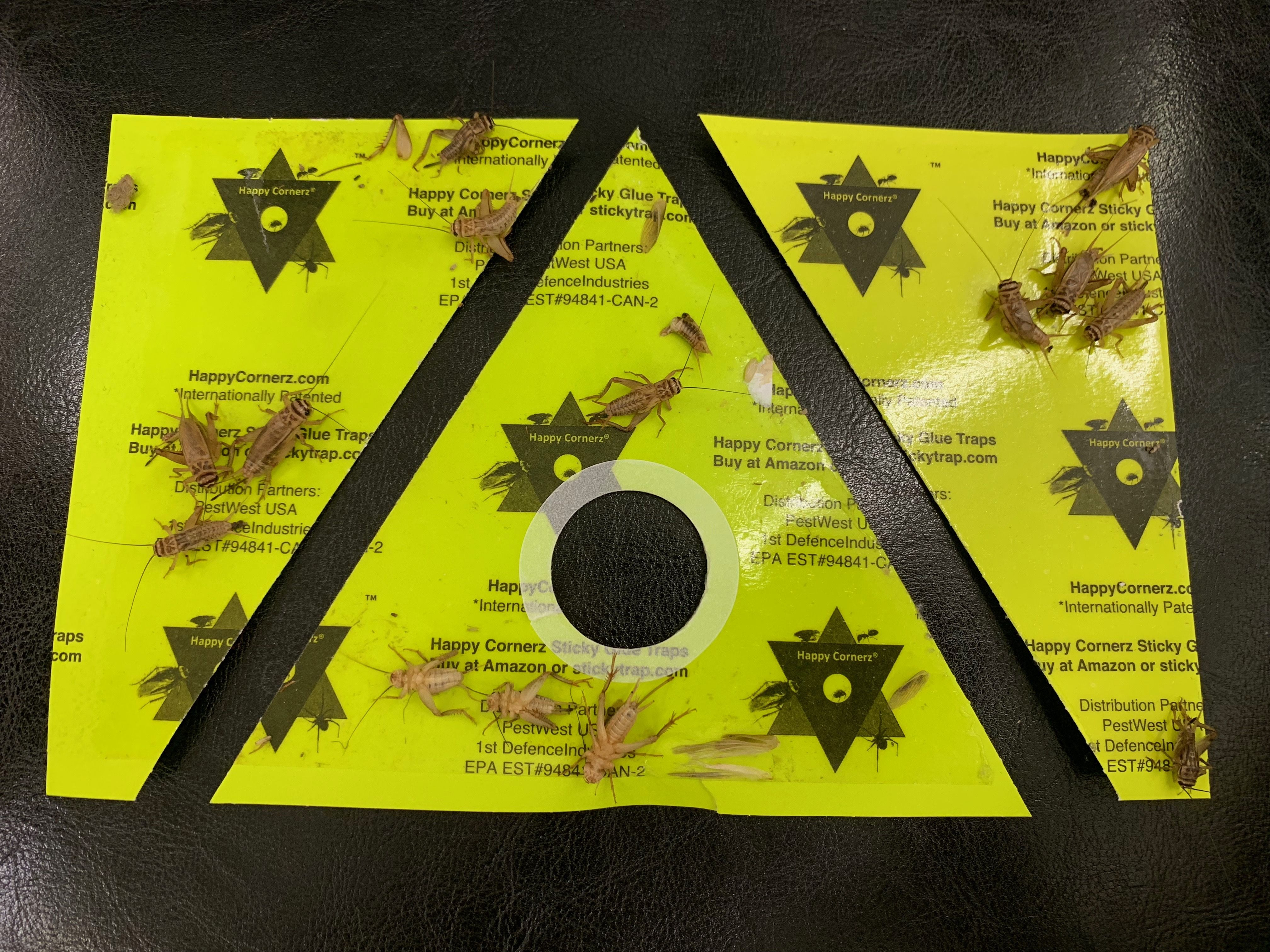 Are you a DIY person? Get Happy Cornerz Sticky Traps to