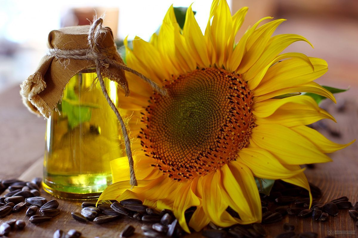 Sunflower Oil Sunflower Oil Hair Oil Oils