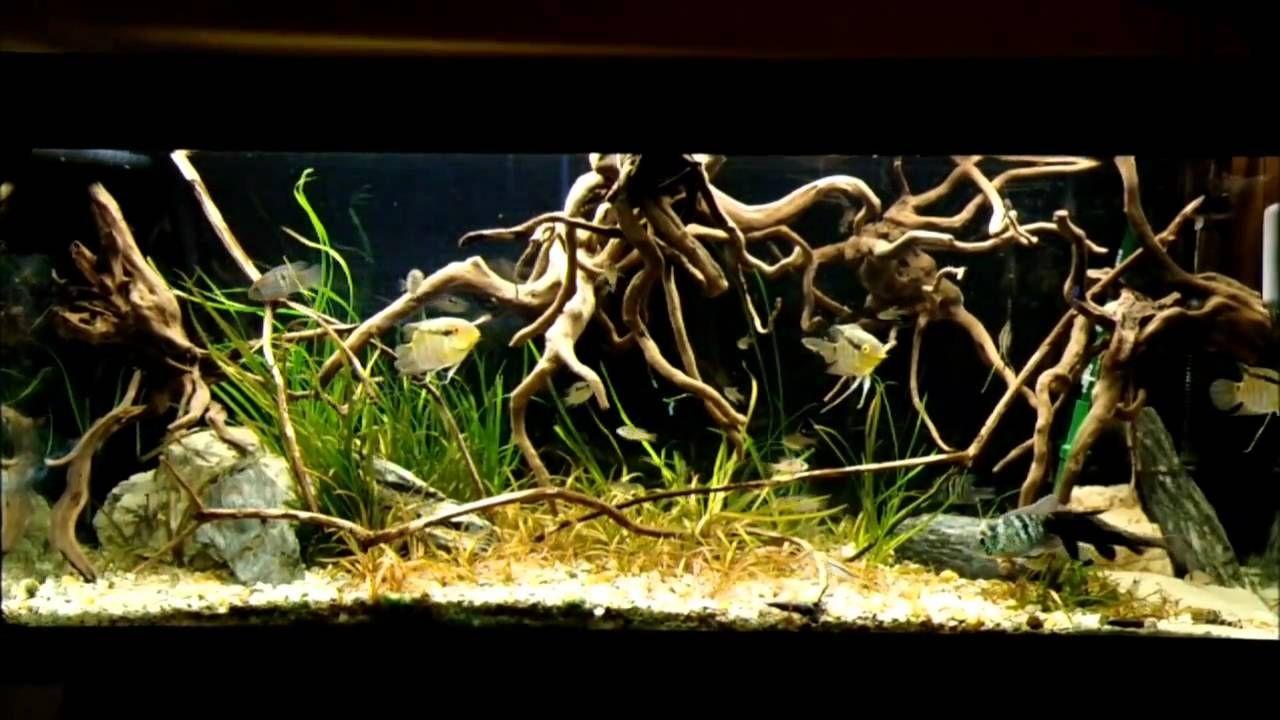 Orinoco Biotope Biotope Aquarium Aquascape Aquarium