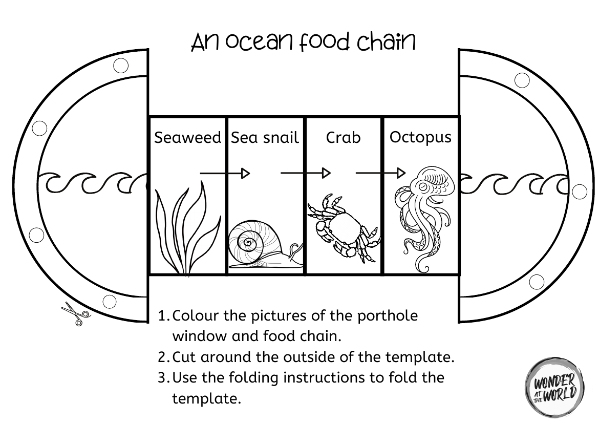 Food Chain Foldables Ks1 In