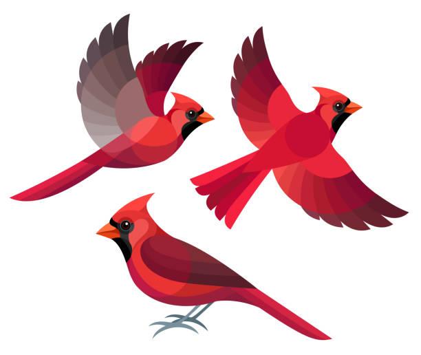536 227 Birds Illustrations Royalty Free Vector Graphics Clip Art Istock Bird Drawings Animal Sketches Cardinal Drawing
