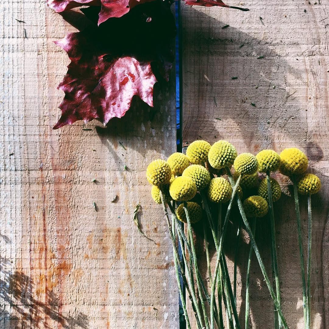 || g o o d v i b e s || comme une journée d'hiver ensoleillée 🌞 . #weekend #goodvibes #sunny #flowers #fleurs #craspedia #wood #winteriscoming #lovethatsmell #lepleindevitaminesdpourlemarathondemain✌🏻️