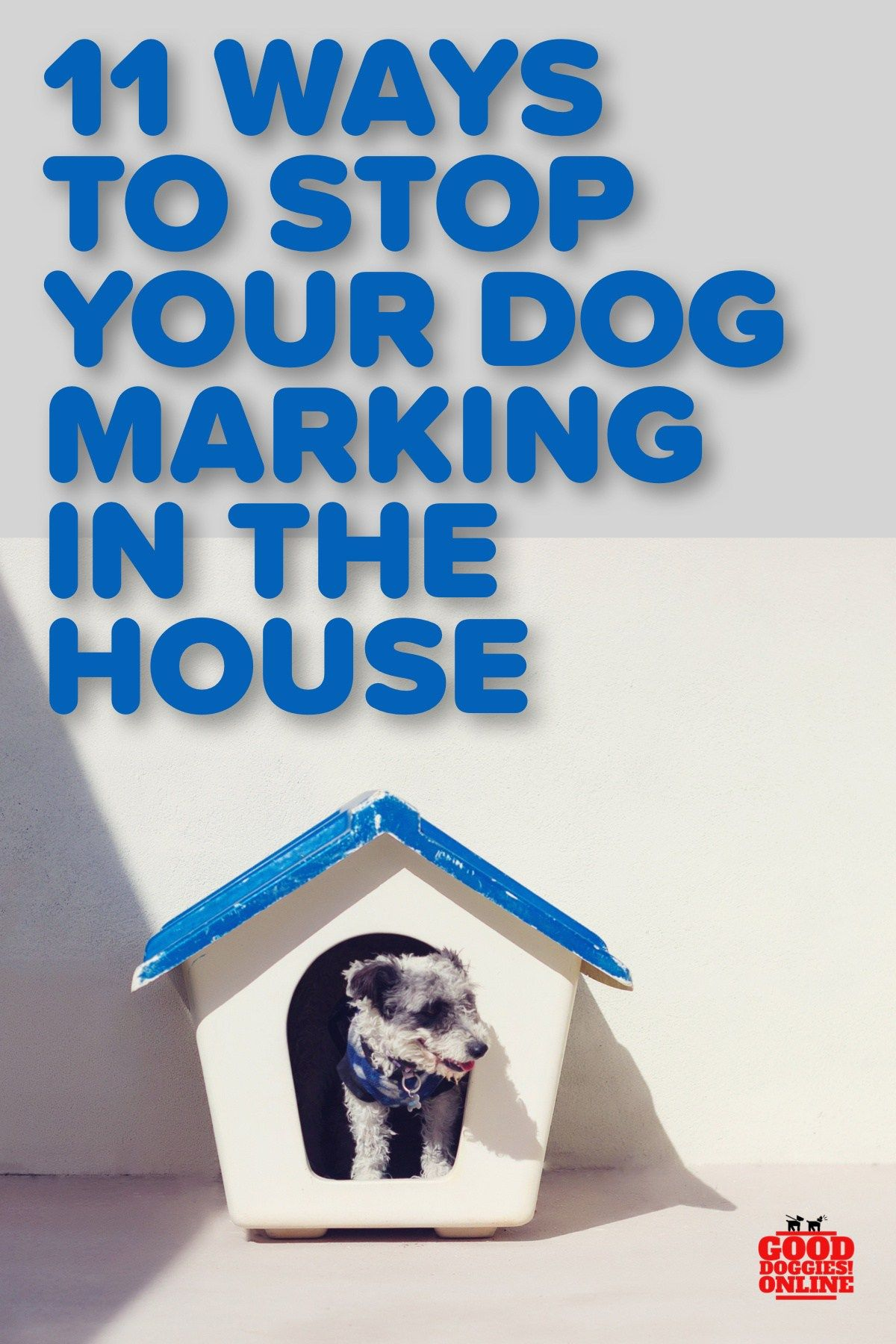 How To Stop Your Dog From Marking In The House Good Doggies Online Dogs Peeing In House Good Doggies Online Your Dog