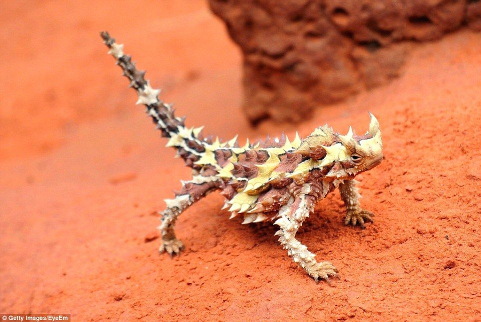 Find out the clever and bizarre ways Australian animals