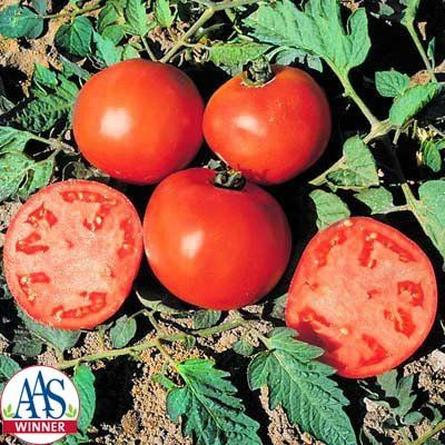 Tomato Celebrity F1 Seeds All Vegetables Tomato Seeds 400 x 300