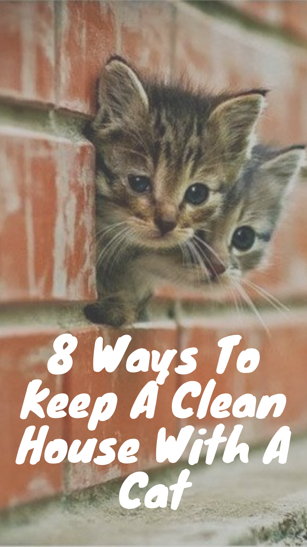Tips To Keeping The House Clean For Cat Owners Cat Kittens Cats Kitten Meow Pet Hacks Cat Parenting Cat Hacks Cats