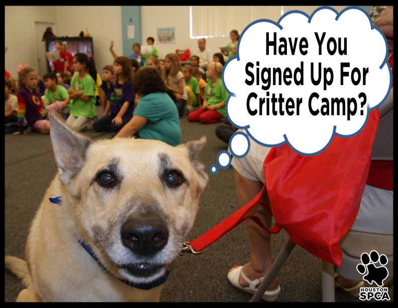 Space Is Filling Up Fast But There S Still Time To Enroll Your Child Into The Houston Spca Spring Break Critter Camp Critter Cam Spca Critter New Adventures