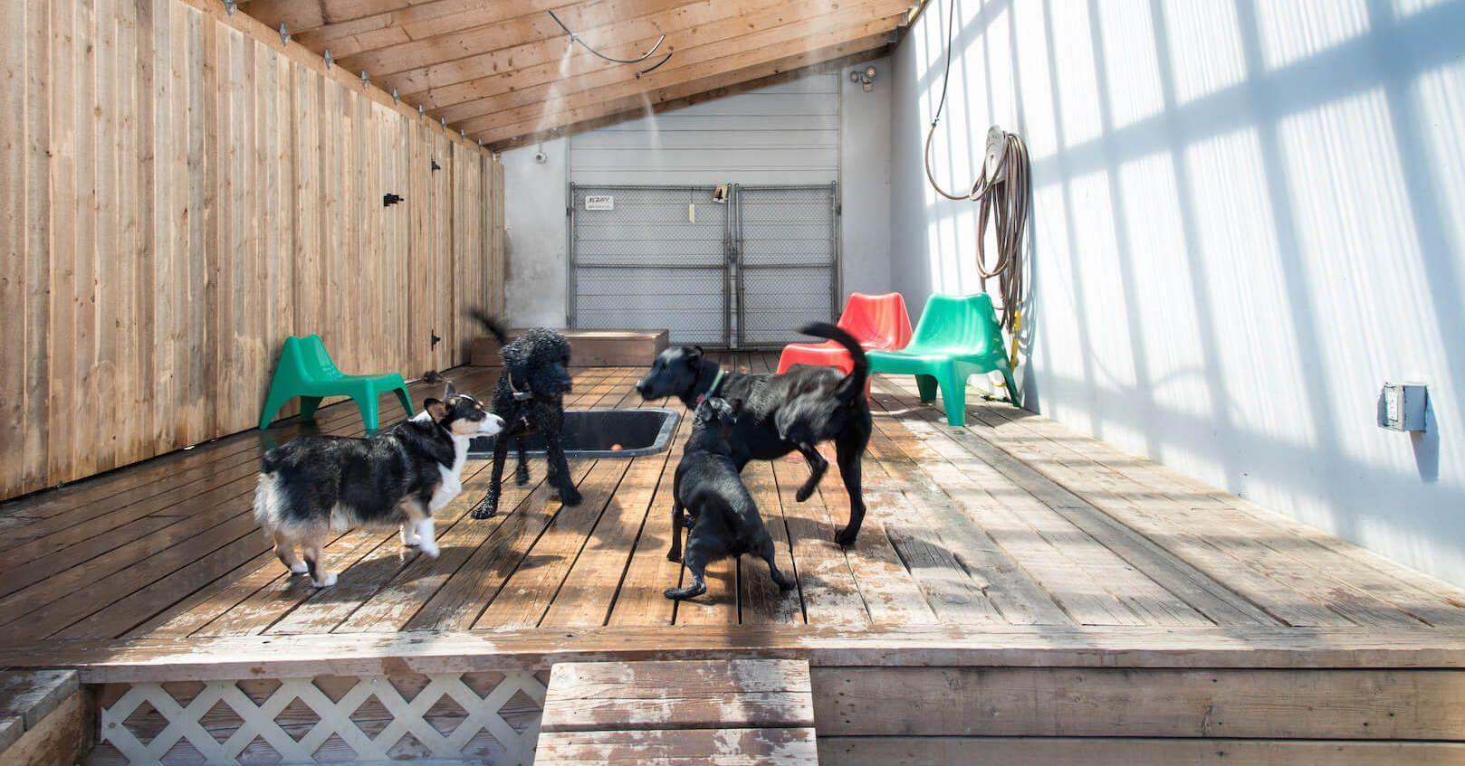 Jet Pet Dog Boarding Hotel Better Than A Dog Kennel Pet Resort Pet Boarding Pet Hotel