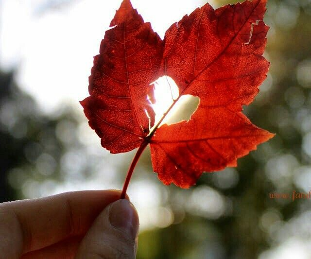 Leaf heart ~...clever idea too!