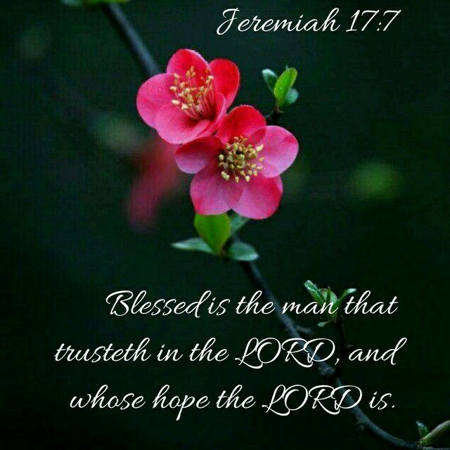 Image result for Blessed is the man who trusts in the Lord kjv
