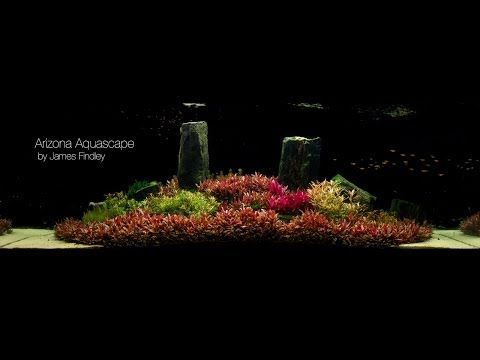 Arizona Aquascape by James Findley (1600 Litre) The Making Of - YouTube
