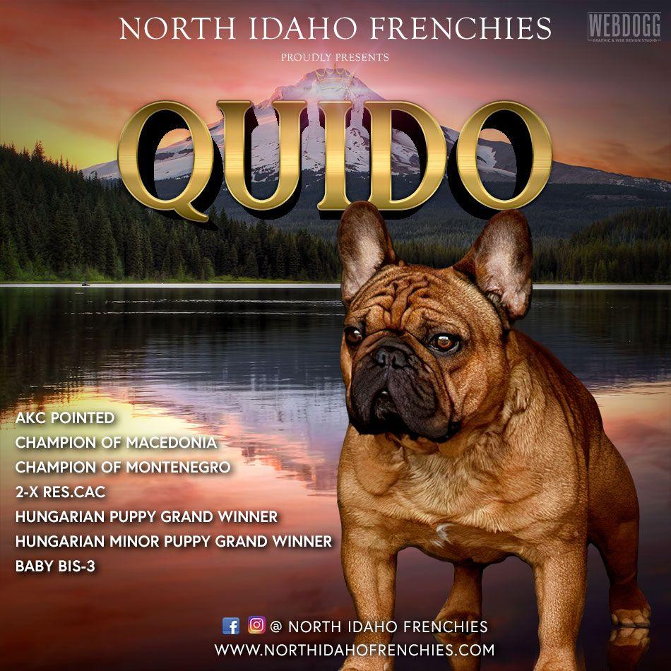 Dog Breeder Banners Dog Kennels Graphics Show Dog Advertising