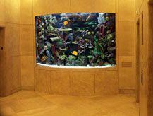 Attirant Living Art Aquatic Design   Custom Aquariums, Reefs, Ponds, Waterfalls And  Maintenance   Press U0026 Clients