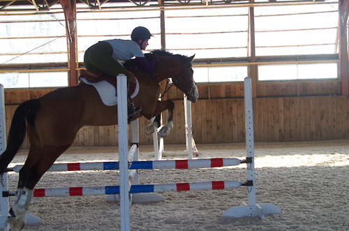 """Interesting jumping exercise to find the middle of a jump. Can also be jumped on the """"skinny side"""". (Someone commented that this looked dangerous, it's like a 2 ft pole jump. A horse could just step over it, or pull the whole thing down.)"""