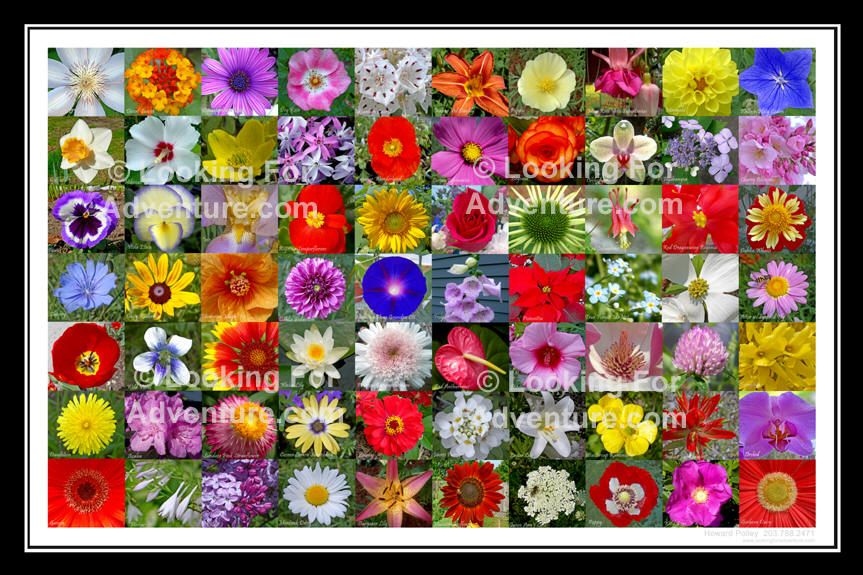 Pictures Of Flower Names Google Search Flower Posts Flowers
