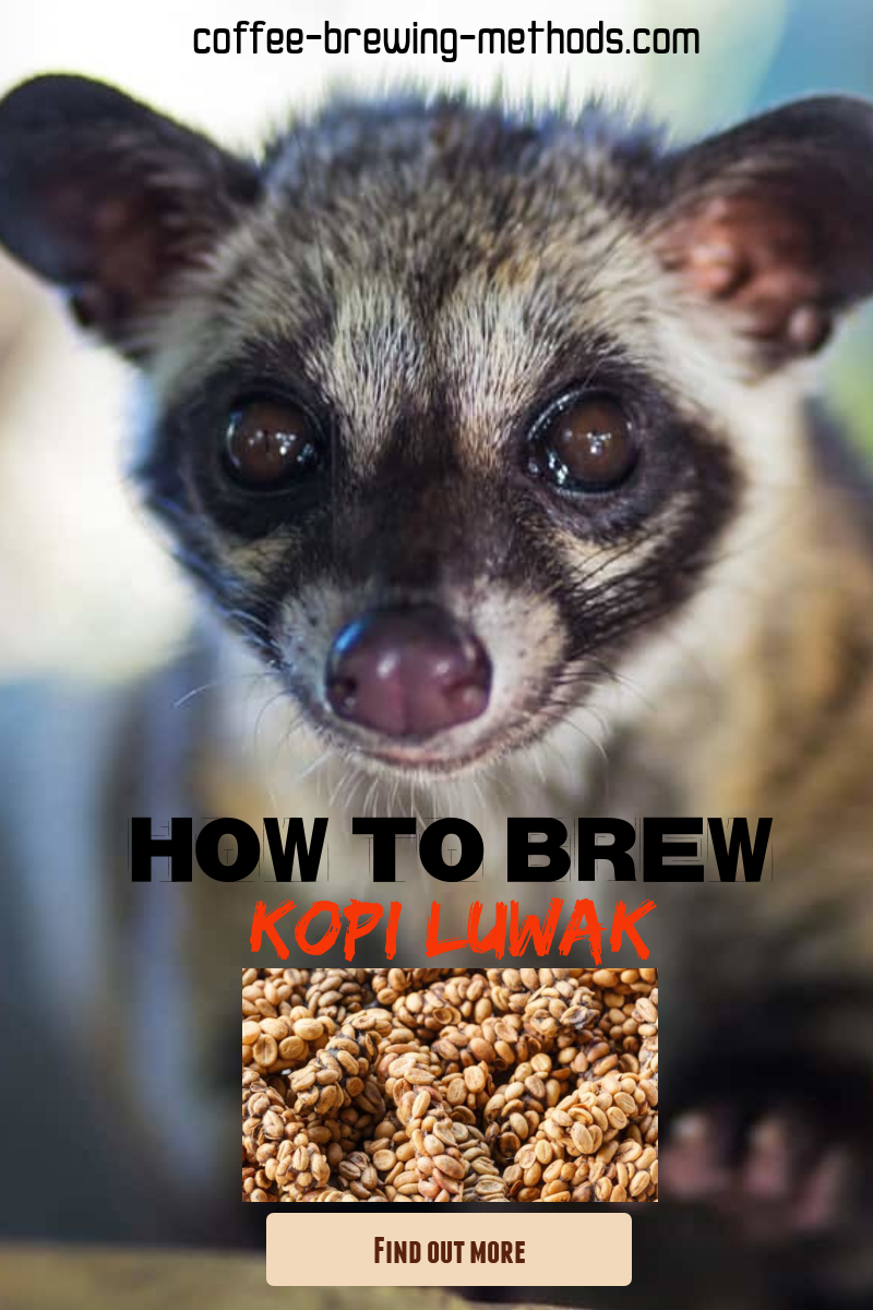 Kopi Luwak - Civet Coffee Is the Most Expensive Coffee ...