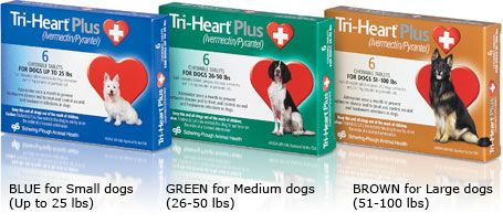 Tri Heart Plus For Dogs Up To 25lbs 6 Month Supply Heartworm Dog Teeth Cleaning Dogs