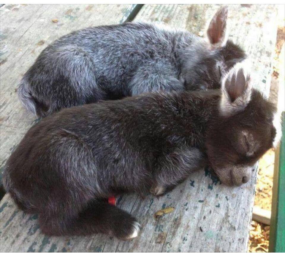Https Www Facebook Com Kitchencraftyfun Photos A 1515832058430694 1073741828 1493461104001123 214959 Cute Baby Animals Cute Funny Animals Cute Animals