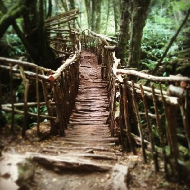 Puzzlewood Forestofdean Forest By Just Berns Forest Of Dean Forest Beautiful Places
