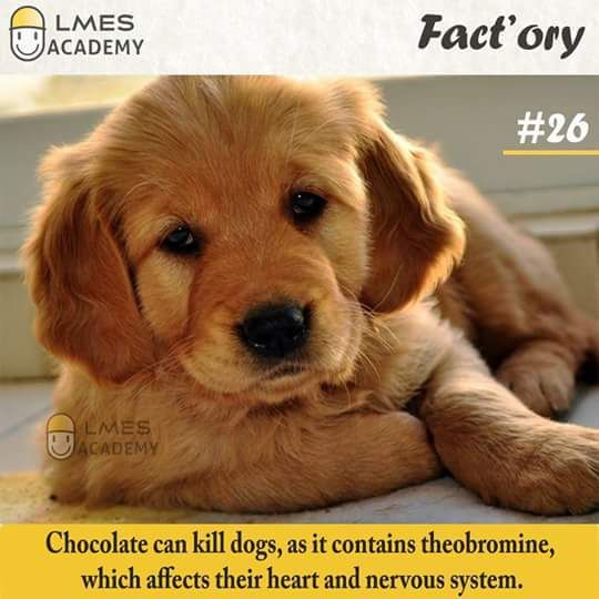 Fact Ory From Lets Make Engineering Simple 1 50 Dogs Golden