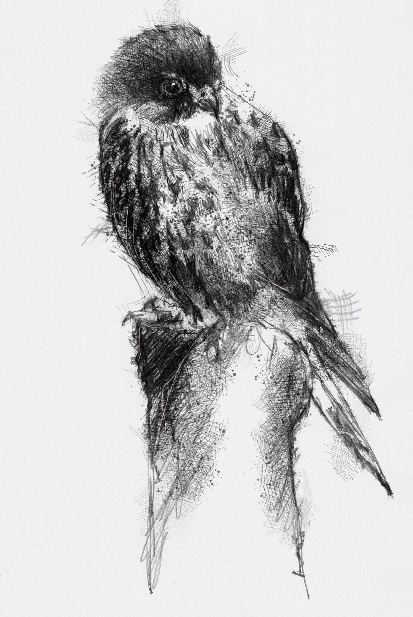 Drawing birds drawing animals bird drawings watercolor drawing animal drawings drawing