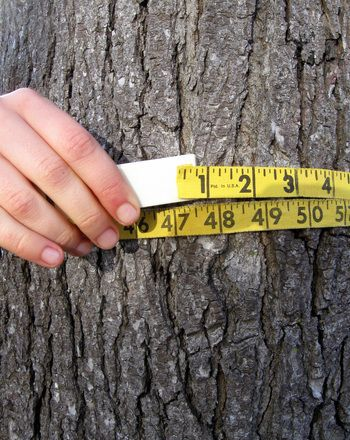 How Old is That Tree? | Activity | Education.com