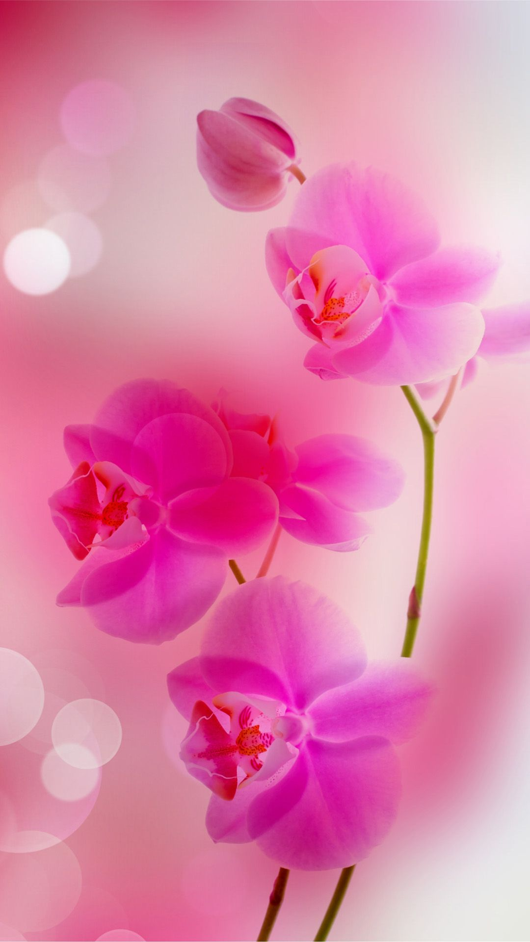 coral wallpaper for iphone   bing images pink wallpaper