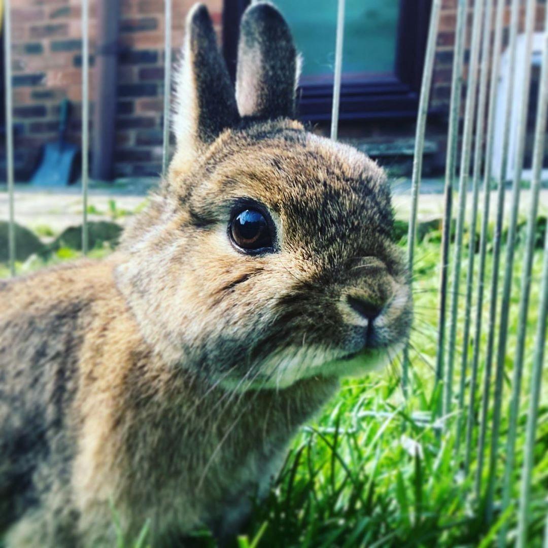Rabbit care guides in 2020 Rabbit care, Pets, Pet rabbit