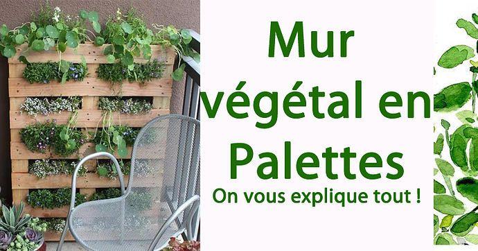 So Bio, So Local, So Positive   Mur végétal en palettes : On vous explique tout !!!