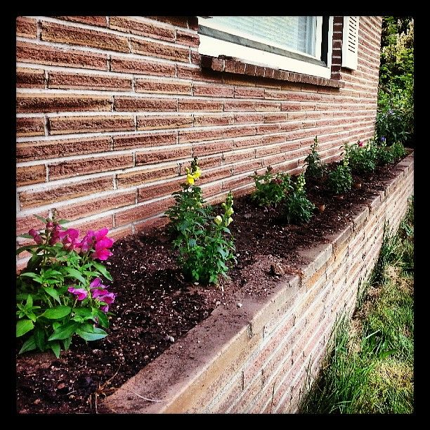 Planted purple, yellow and white snapdragons along with