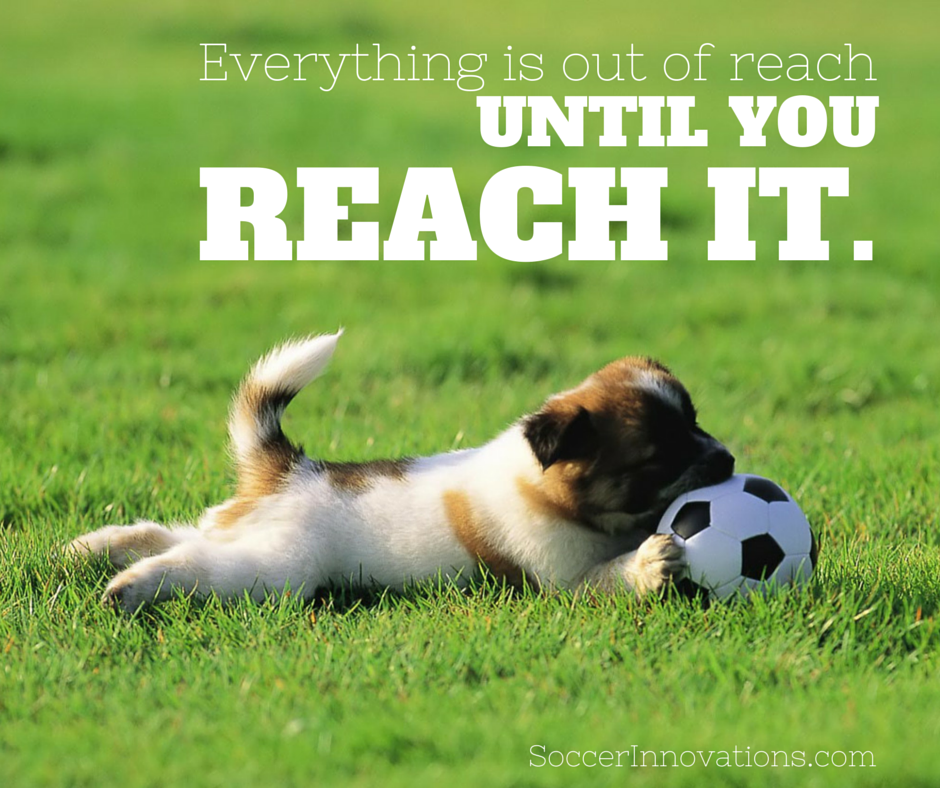 Everything Is Out Of Reach Until You Reach It Reach Goals Dog Expressions Cute Dog Wallpaper Dog Allergies