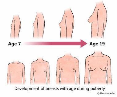 illustration of development of breasts during puberty in girls ...