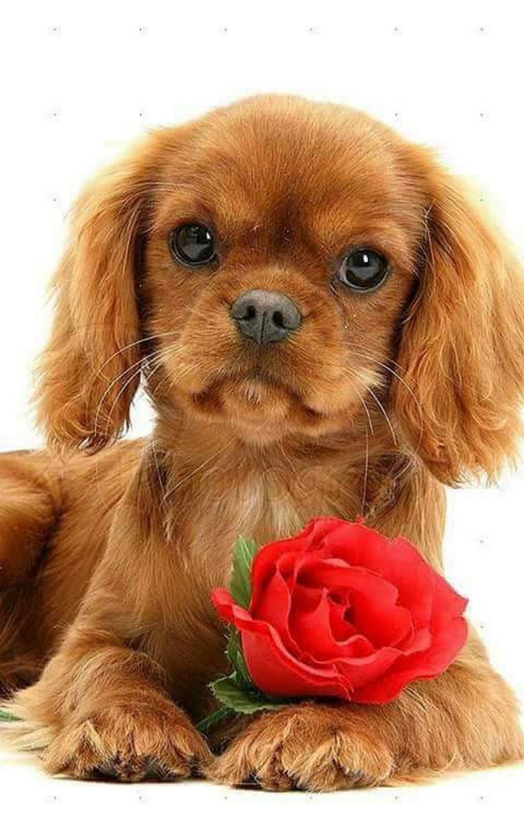 Фотография | Собаки, Животные и Собачки