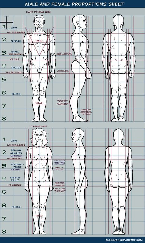 Male and female proportions sheet by Aldriann   corpos   Pinterest ...