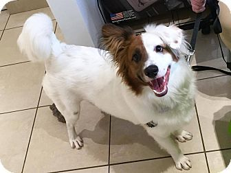 Cleveland Oh Border Collie Mix Meet Handsome Hampton A Dog