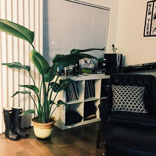 Welcome our new leafy friend