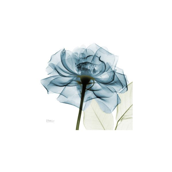 Teal Rose Premium Giclee Print ($40) ❤ liked on Polyvore featuring home, home decor, wall art, teal home accessories, rose home decor, rose wall art, teal blue home decor and teal home decor
