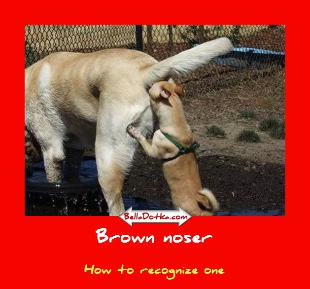 Working The Brown Noser Memorable Quotes: Brown Noser – That's How One Looks Like