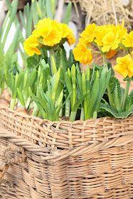 HALLO VÅREN !   Så er endelig våren kommet med herlige farger og GLEDE!              For første gang i år har jeg vært utendørs å ta...